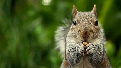 10 Things to Hate About Squirrels