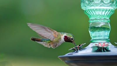5 Gifts for Birding Enthusiasts