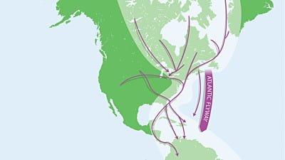 Bird Migration: Birds of the Atlantic Flyway