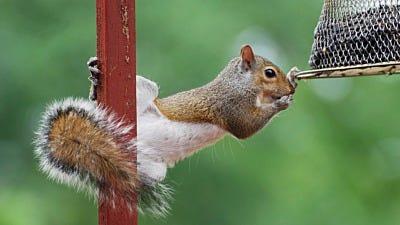 Backyard Squirrel Battles Require Balance