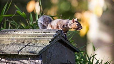 Bird Seed Storage: How A Squirrel Bandit Almost Got Away with It