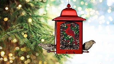 Deck Your Yard with Winter Bird Feeding Essentials