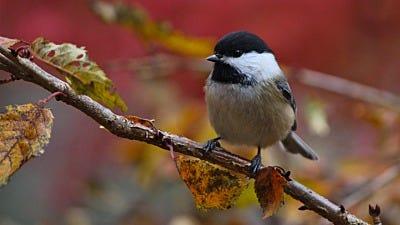 Fall Bird Feeding Tips