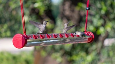 How to Attract Scores of Hummingbirds to Your Yard