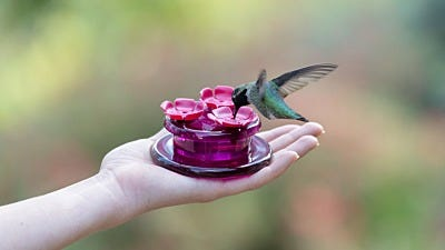 How to Hand Feed Hummingbirds