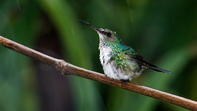 Hummingbirds, Hurricanes, and Storms!