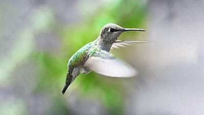Hummingbirds, Start Your Engines. Migration is Here!