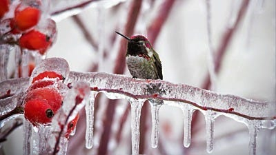 Hummingbirds in Winter: How to Attract Them All Year