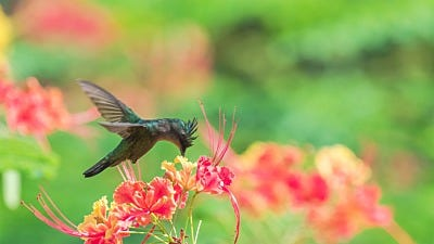 Is It Possible to Catch A Hummingbird?