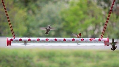 It's Hummingbird Happy Hour at the Hummerbar®