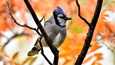 Optimize Your Yard for Fall Bird Feeding