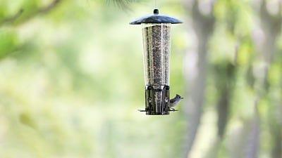 5 Green Reasons to Try Bird Feeding