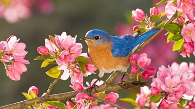 Spring is Here! Get Your Bird Feeders Ready