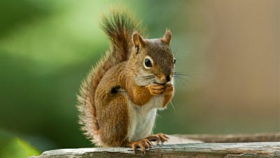 Squirrel-Resistant Bird Feeders: Your Backyard is Our Battle