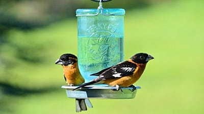 The Importance of A Water Source for Birds
