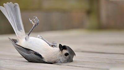 What To Do If You Find An Injured Bird