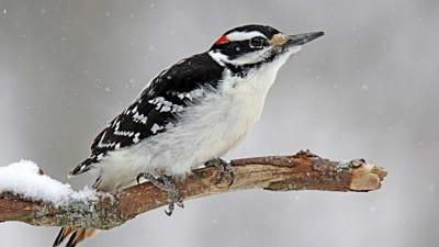 Where Do Winter Birds Go At Night?