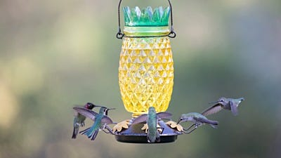 Why Do Hummingbirds Like Sweet Food?