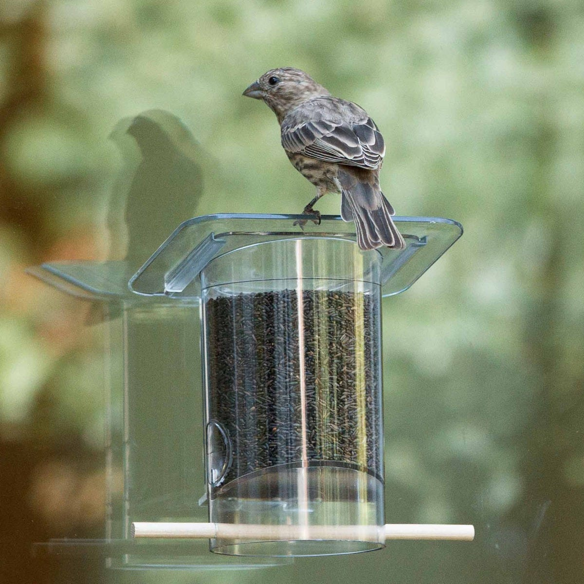 A small K Feeder for the office can be a perfect pick-me up.