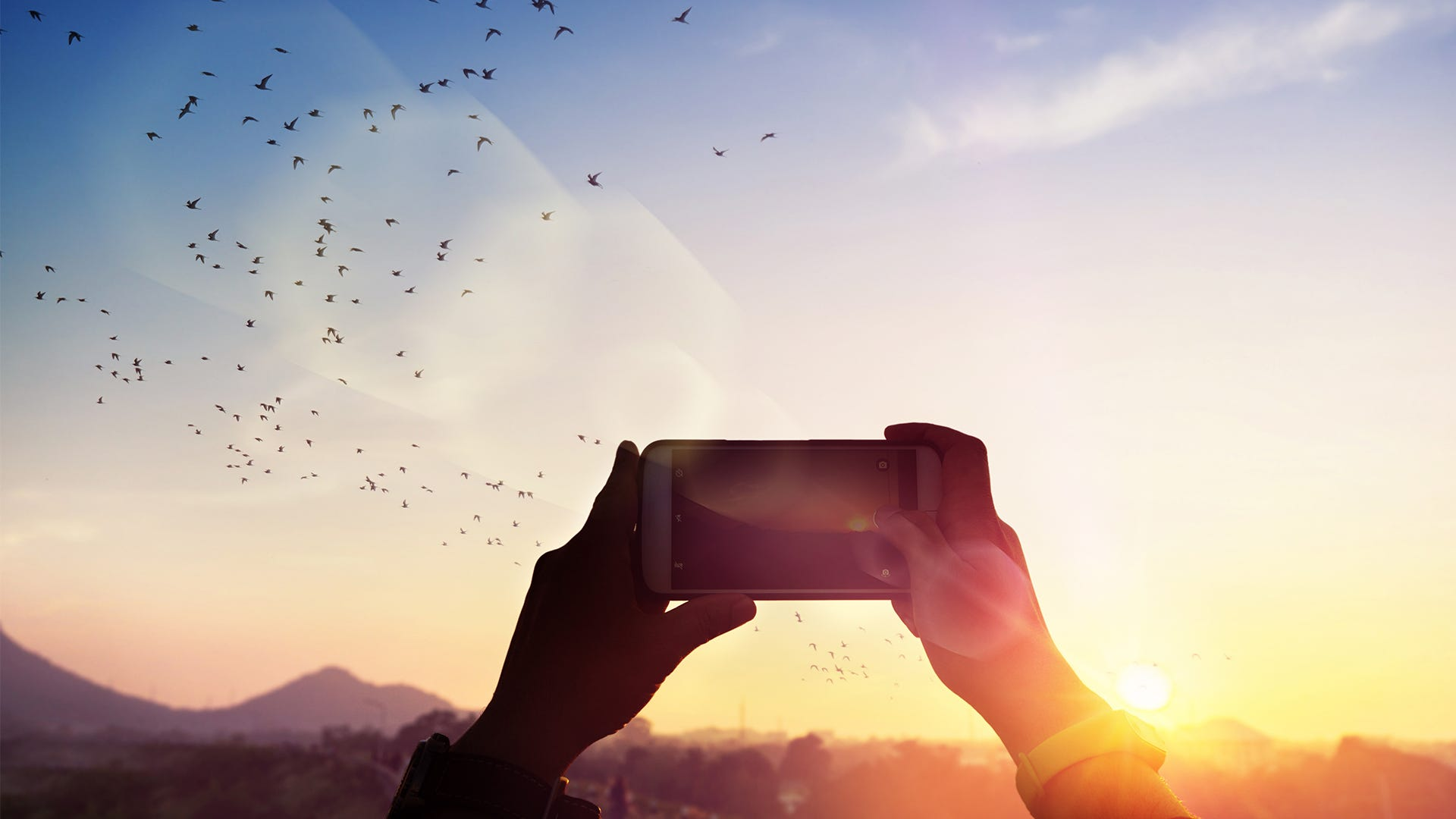 5 Tips for Taking Better Pictures of Birds with a Smartphone