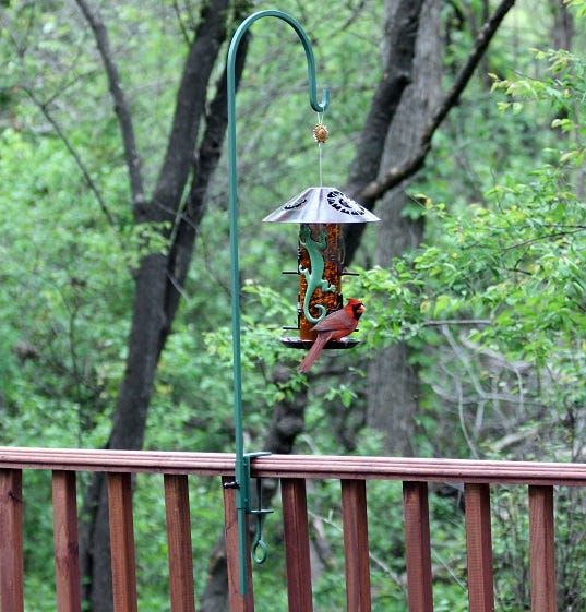 feeder placement