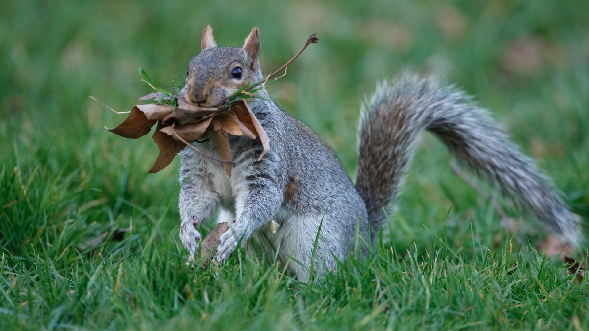 All about Squirrel Nests