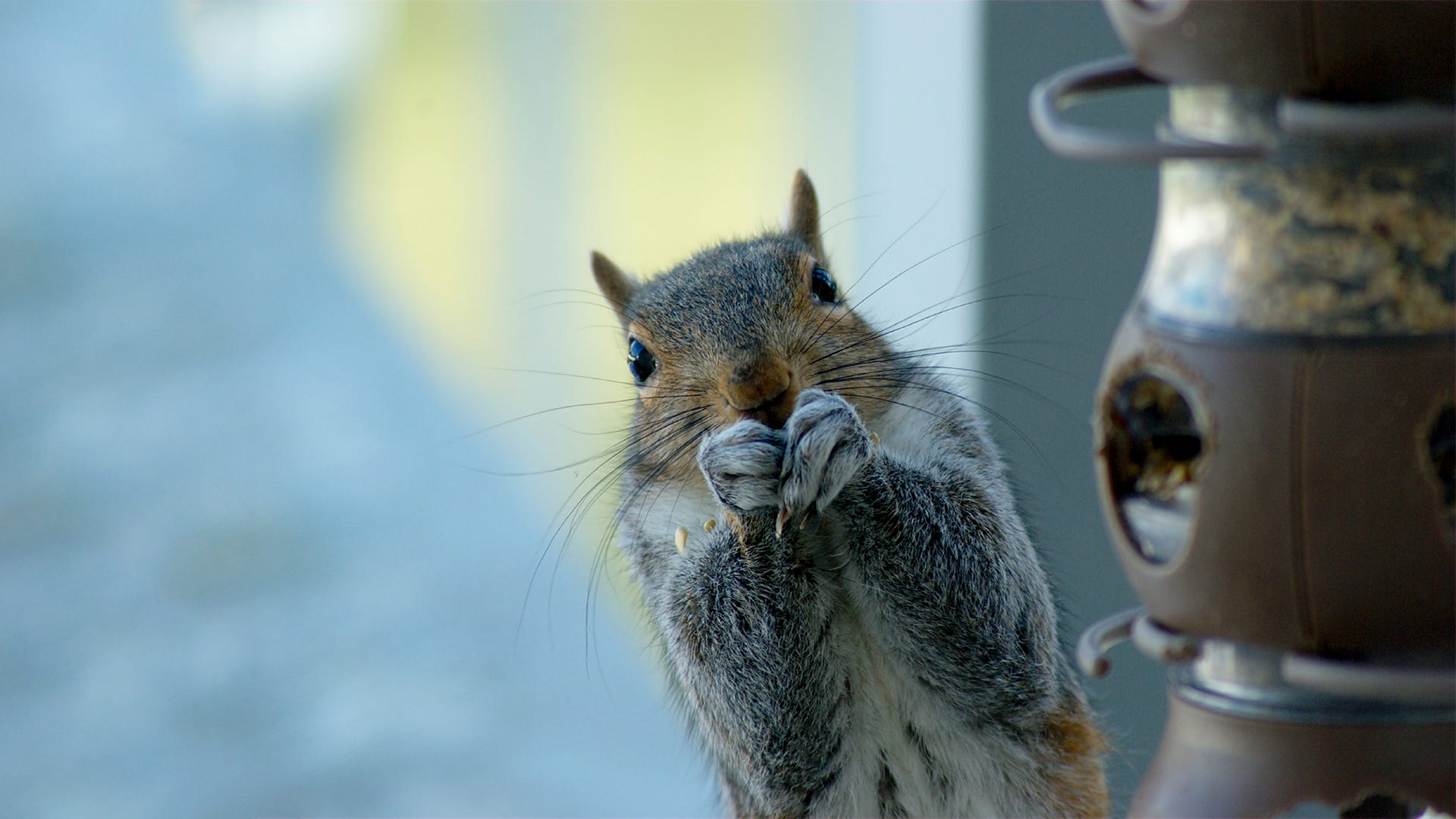 America's Most Wanted: Squirrels Gone Wild