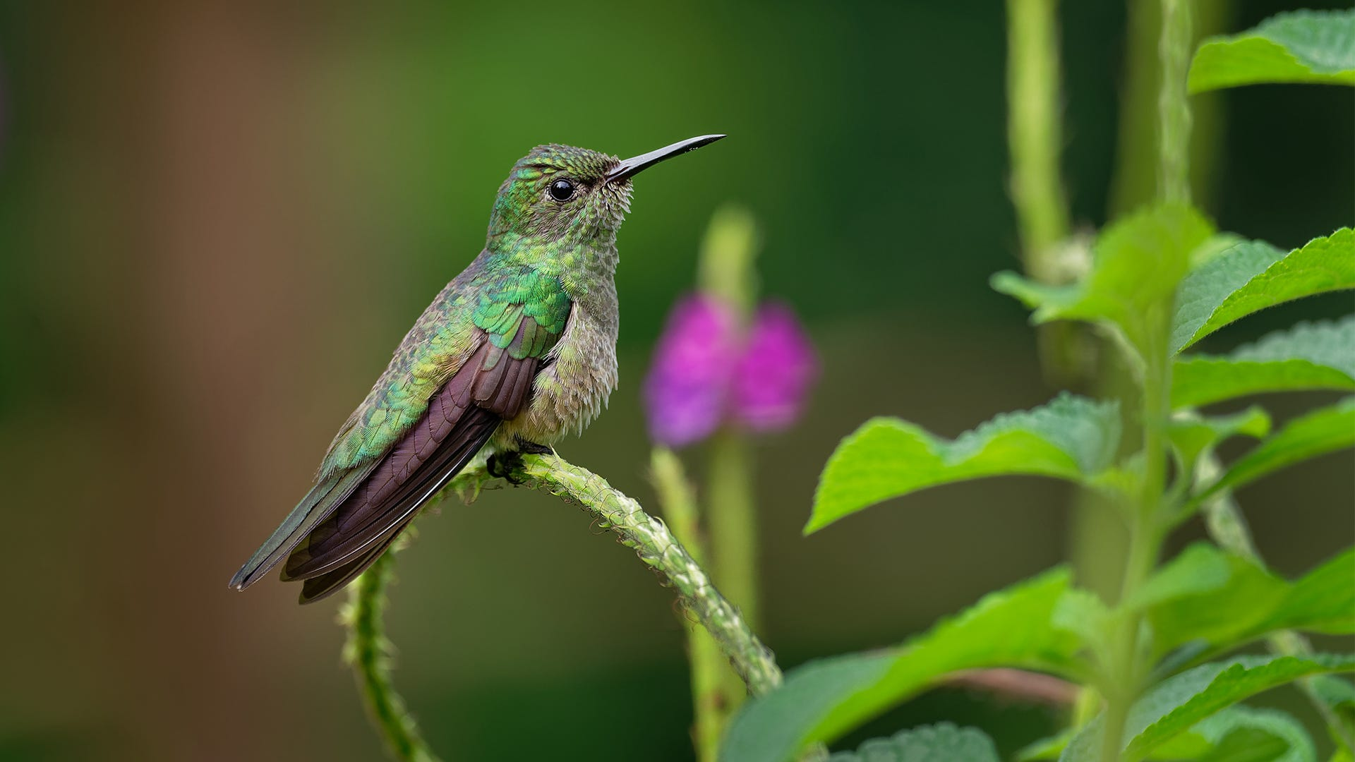 Anatomy Of A Hummingbird: What Makes Up These Tiny Birds?