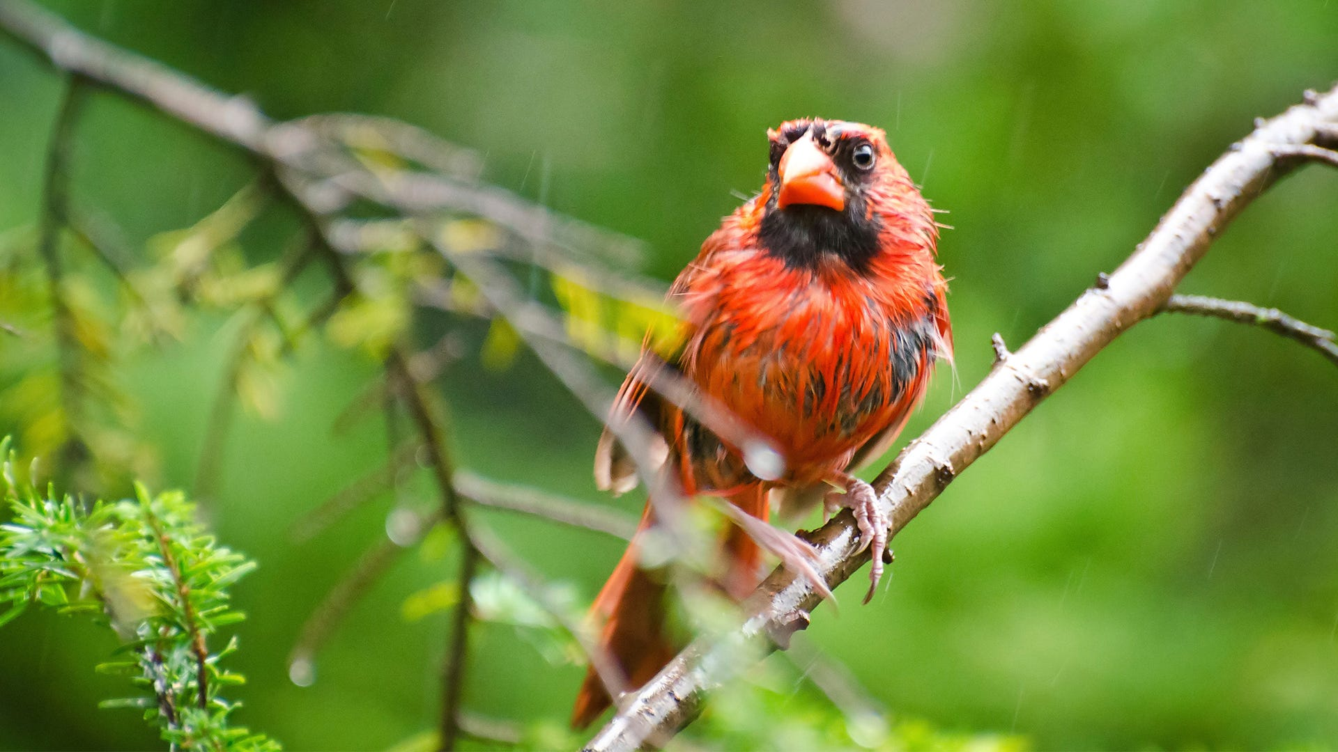 Avoid Wet Bird Seed: 3 Ways to Keep Bird Seed Dry