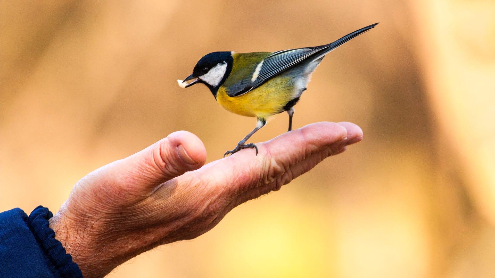 Bird Conservation: Helping North America's Birds