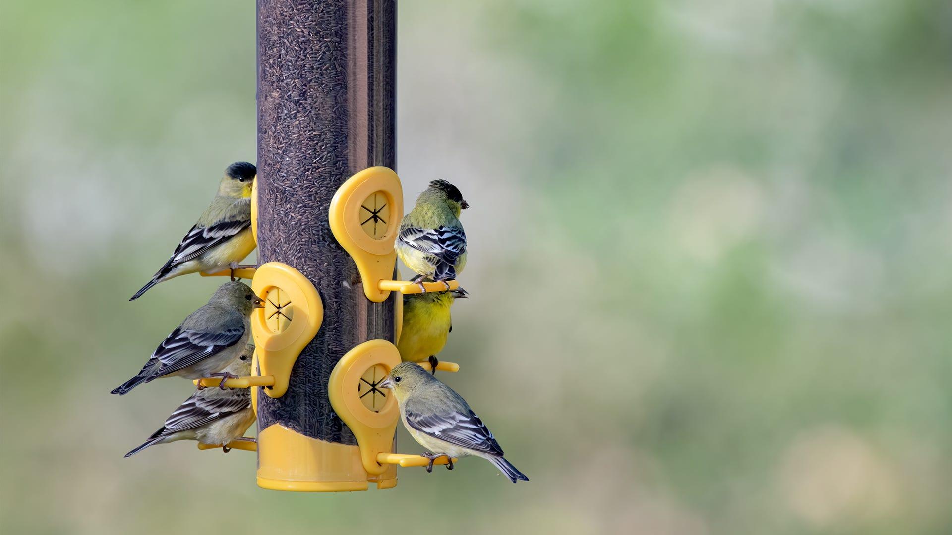 Bird Feeding on a Budget