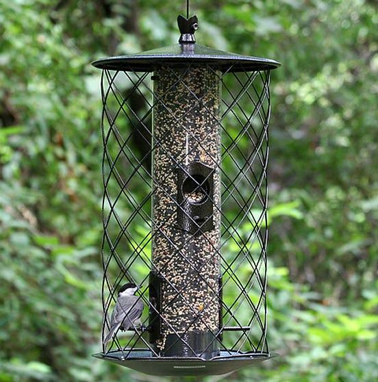 birds at birdscapes feeder