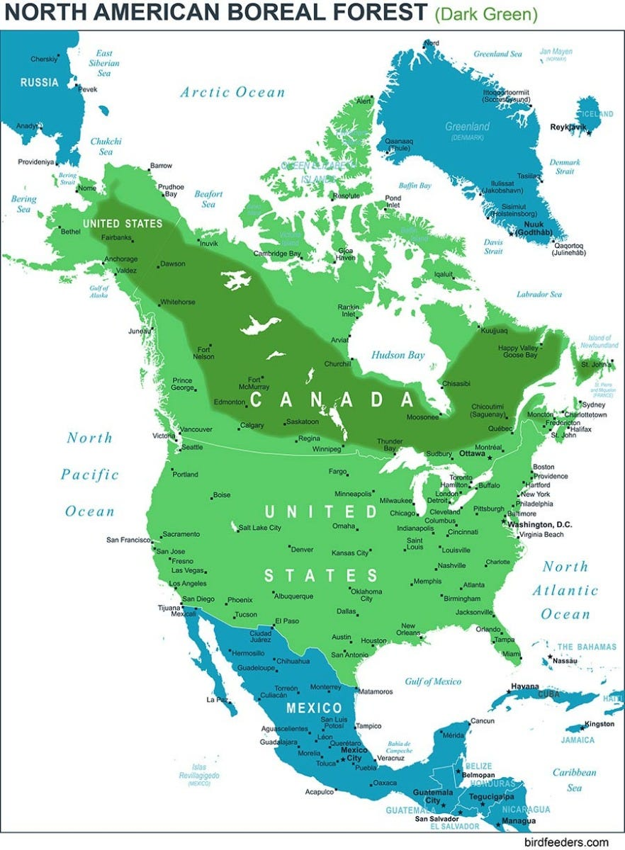 The North American Boreal Forest stretches from Alaska to Newfoundland.