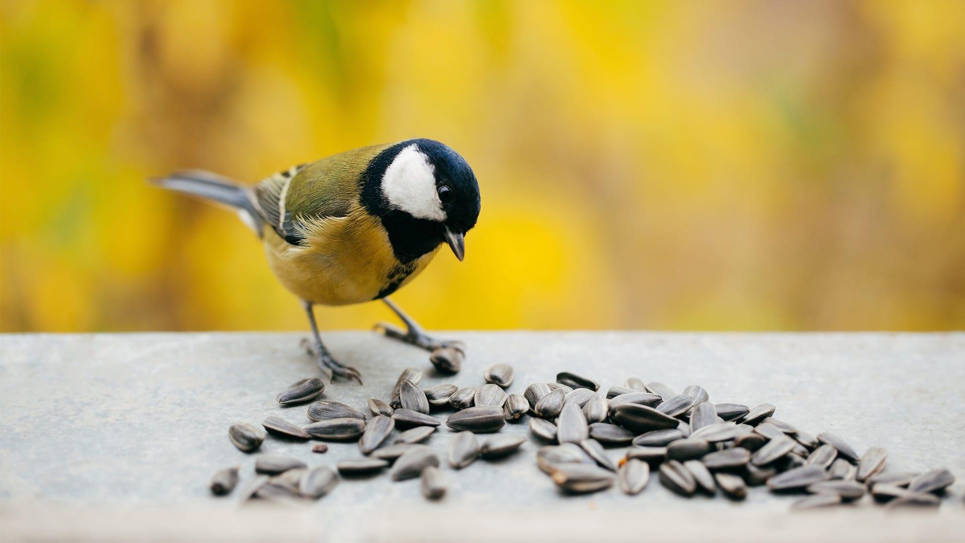 Busted! 5 Bird-Feeding Myths Put to Rest