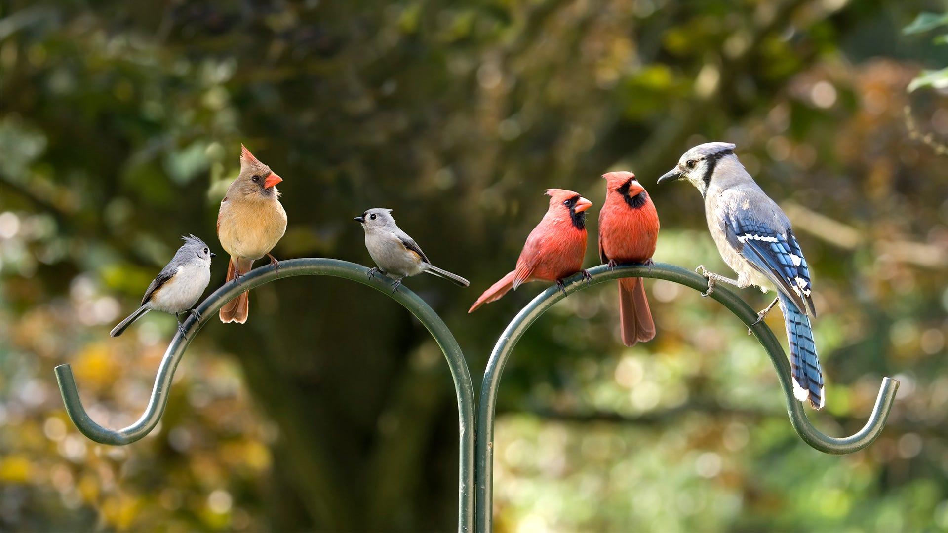 Celebrate National Bird Feeding Month