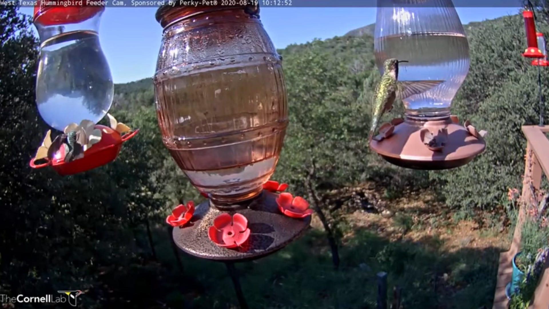 Check Out the Perky-Pet® Hummingbird Feeder Cam
