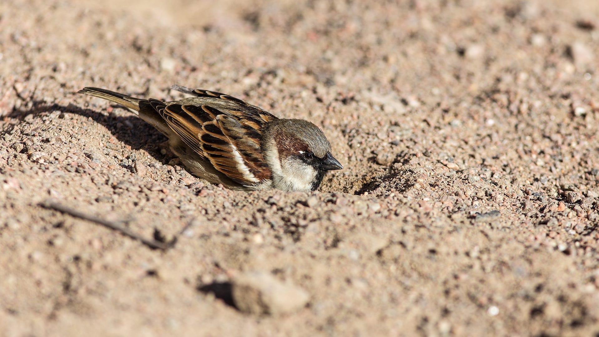 Deciphering Common Wild Bird Behaviors