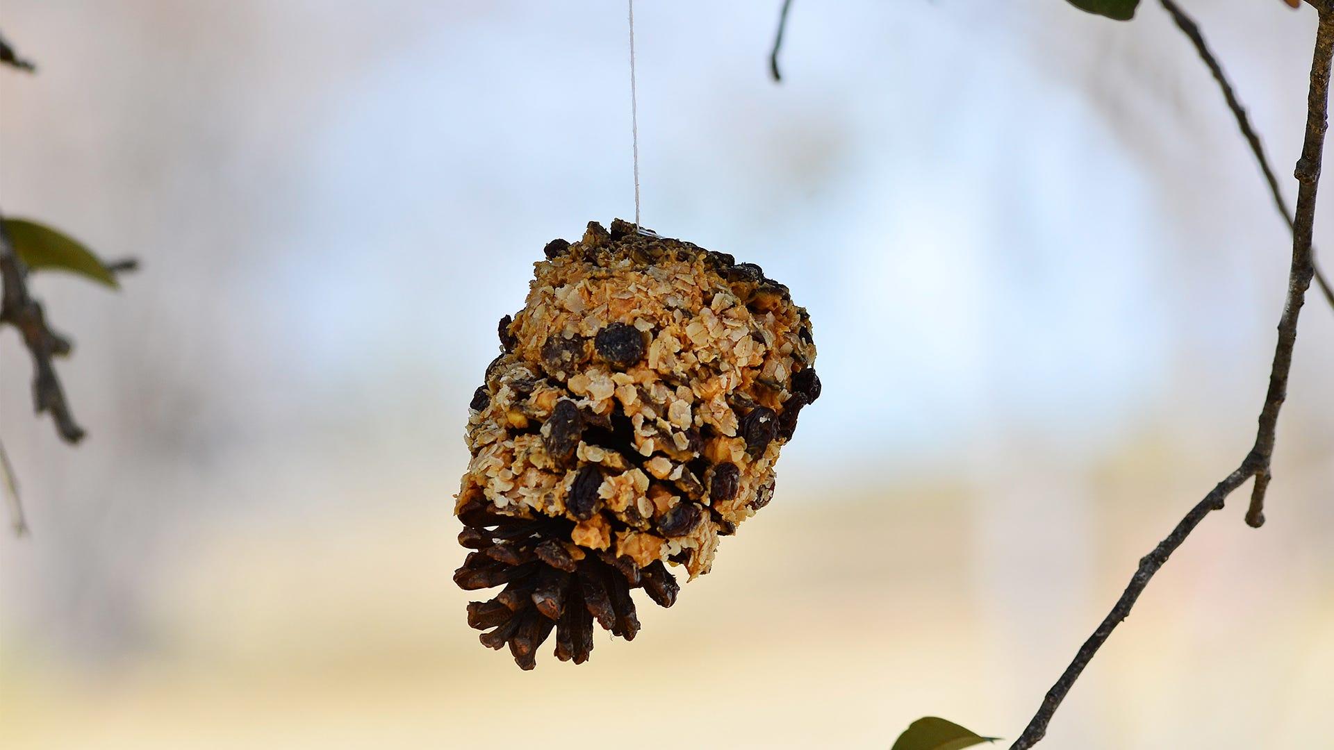 Get Crafty: 4 Easy Bird Feeding Crafts for the Family
