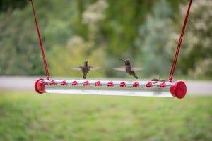 hummerbar hummingbird feeder