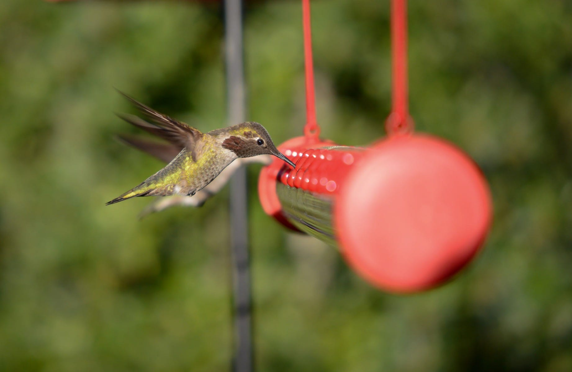 hummerbar hummingbird feeder close up