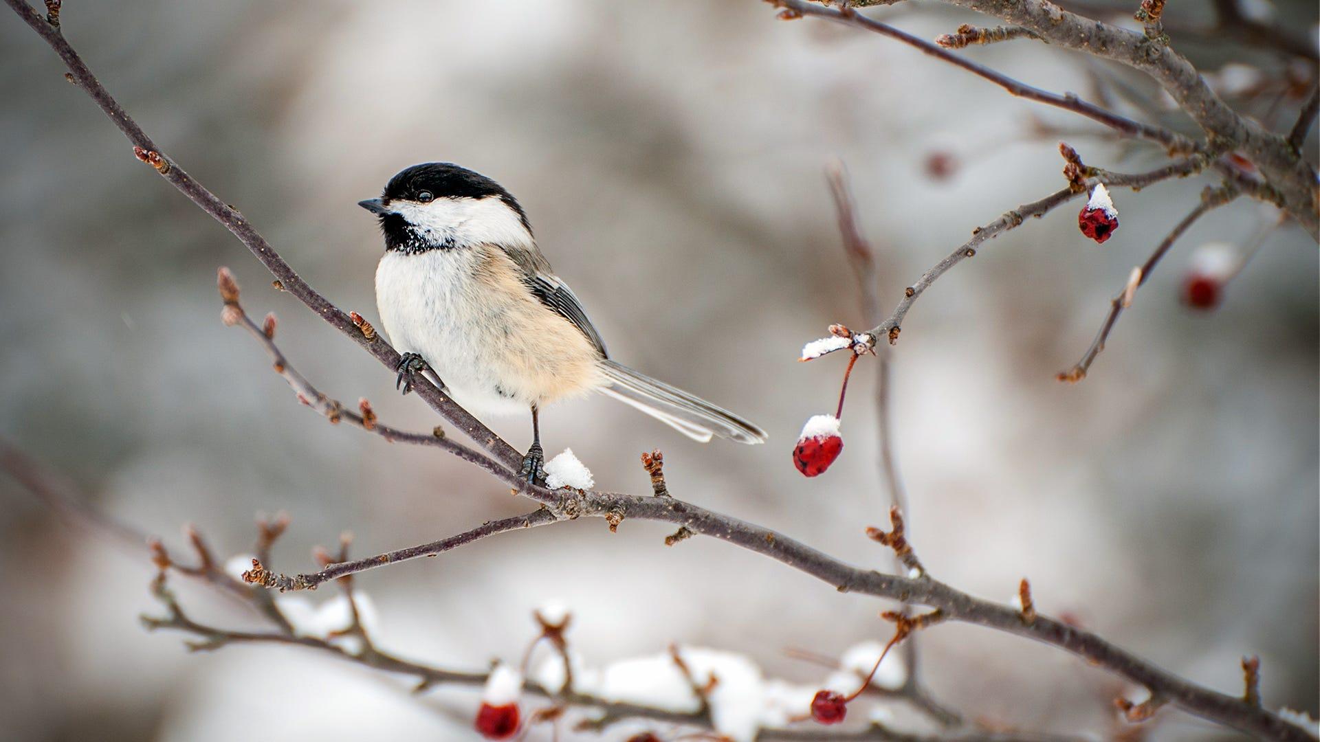 Holiday Bird Feeding: Treating Birds to A Winter Feast