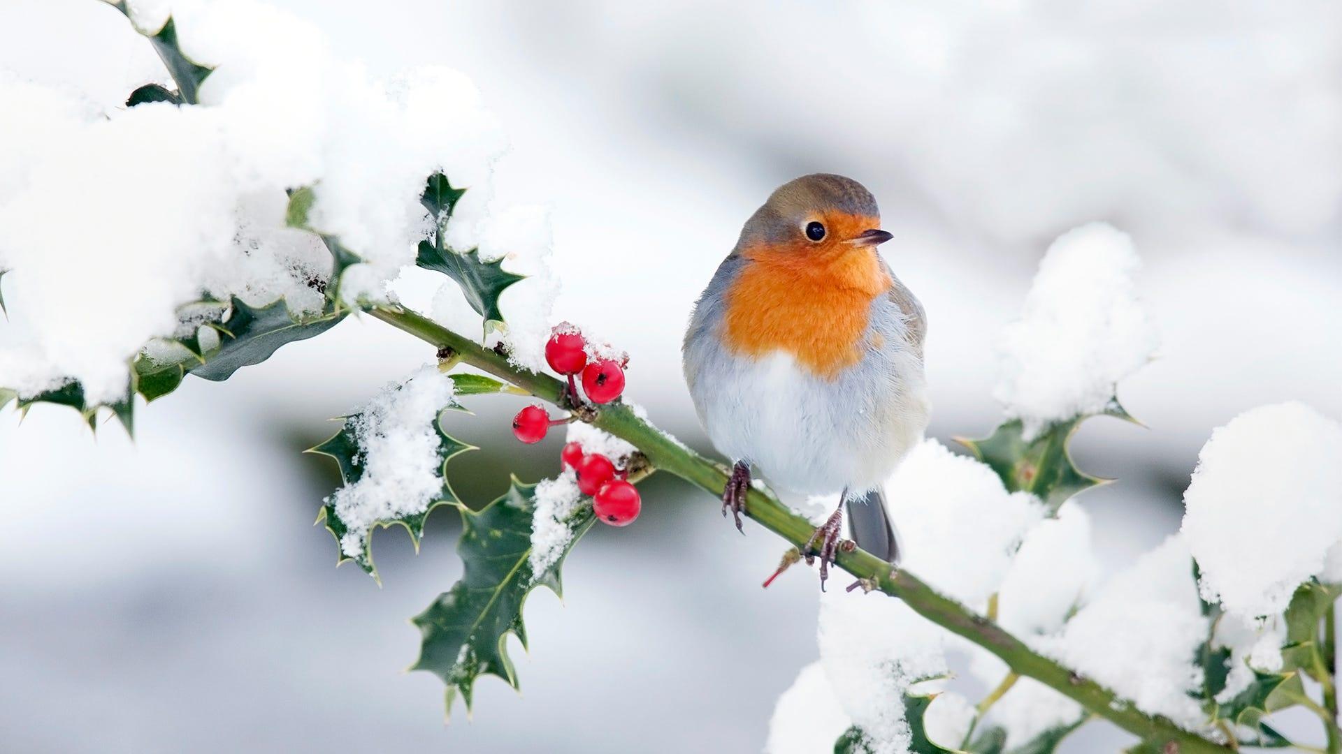 How Birds Survive in Winter Weather