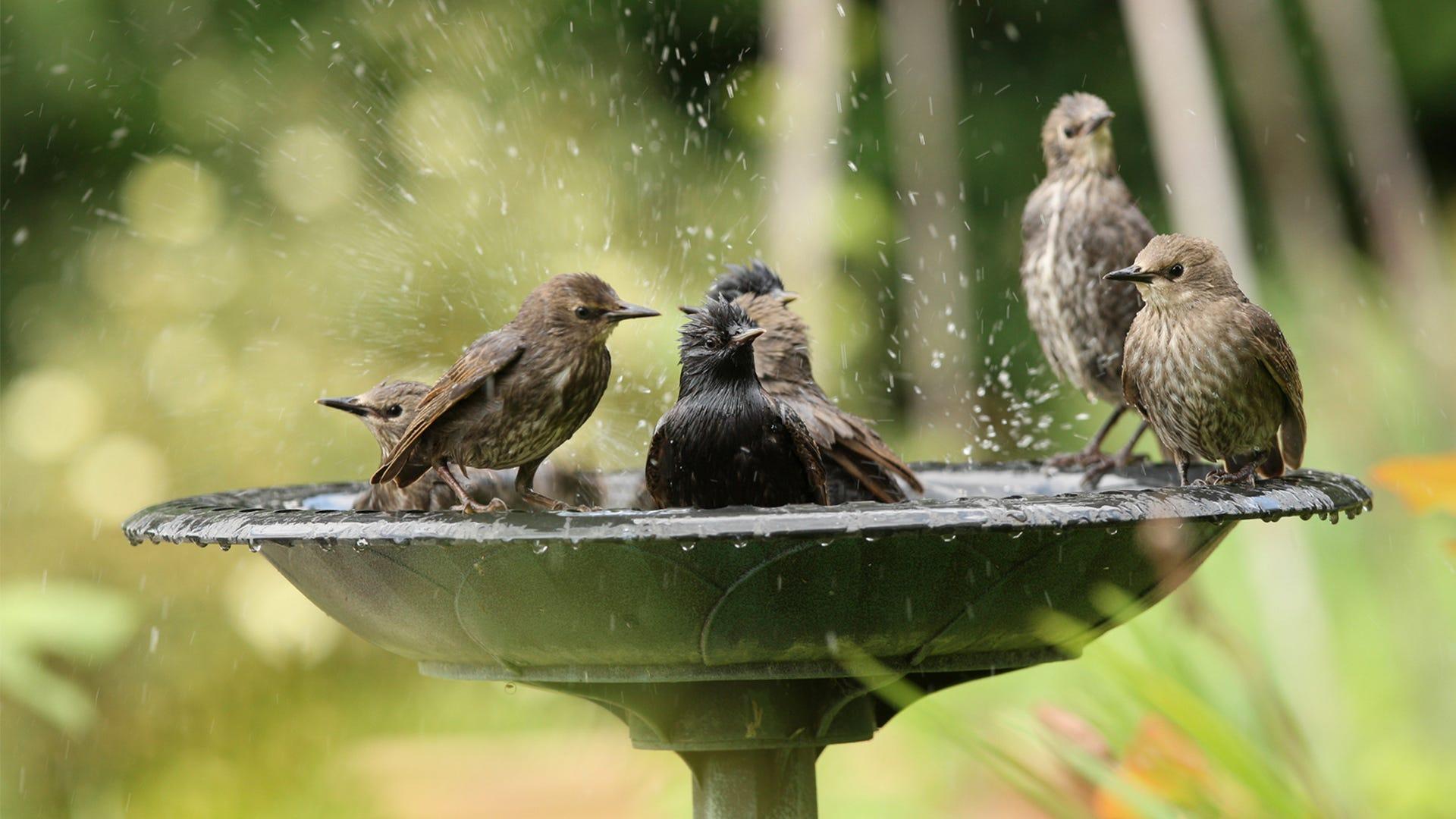 How to Build A Homemade Bird Bath