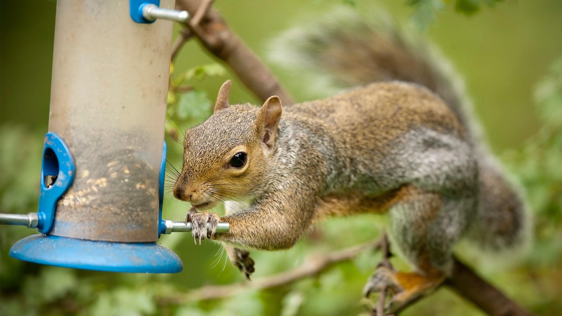 How to Squirrel Proof Your Yard