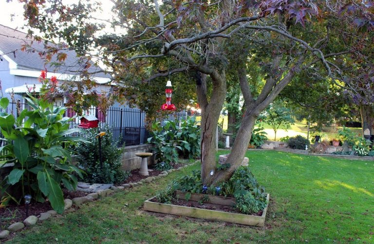 Doug and Terri Elvey's backyard is a bird-feeding haven offering multiple feeders, bird baths, sheltering plants and trees, a pond and plenty of colorful flowers.