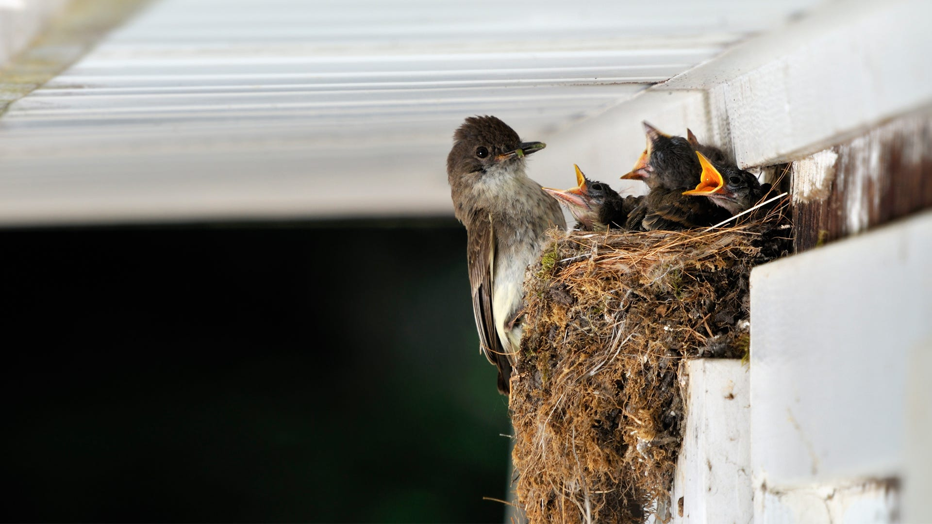 Identifying Wild Bird Nests