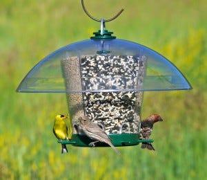 k-feeder with multiple birds