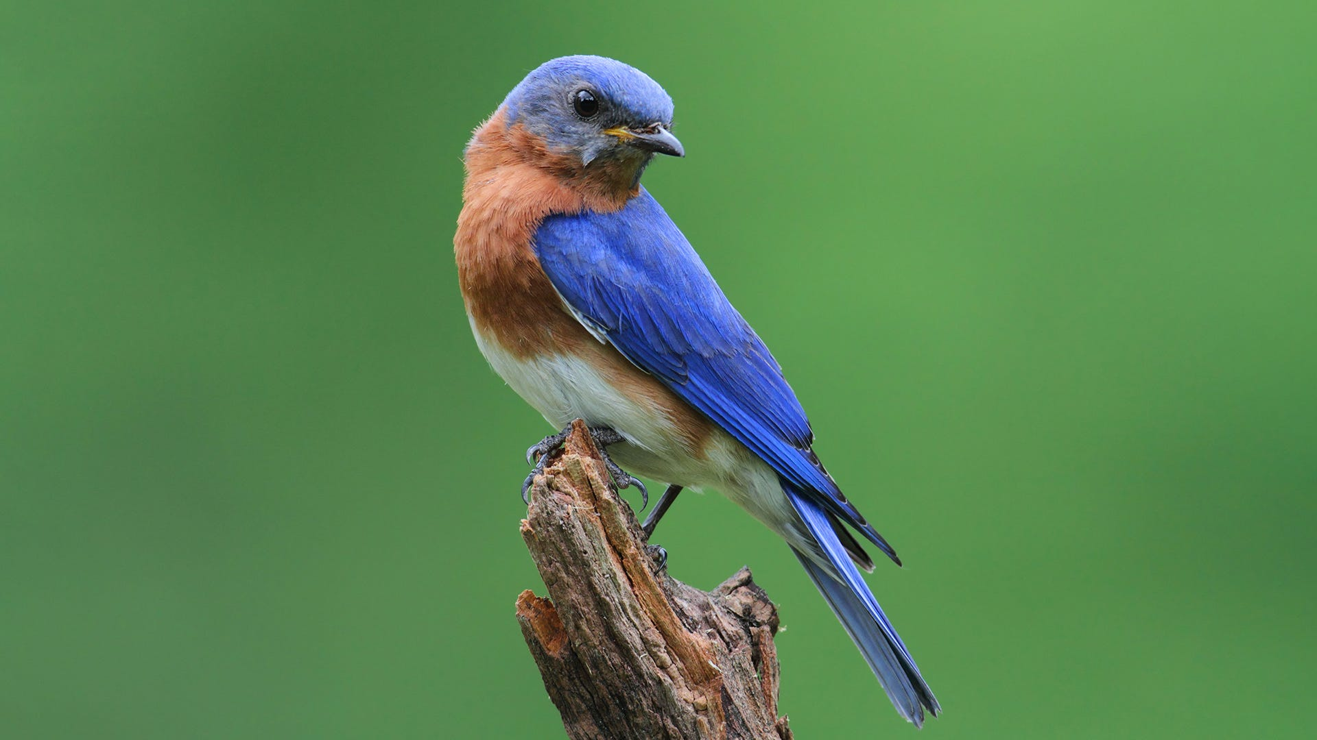 Learn About PA Songbirds at Hawk Mountain