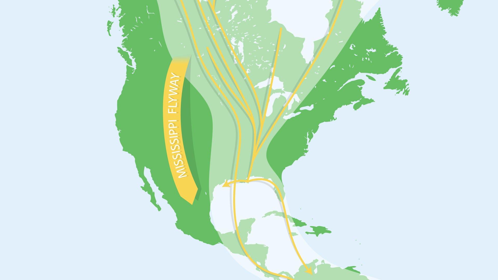 Bird Migration: Birds of the Mississippi Flyway