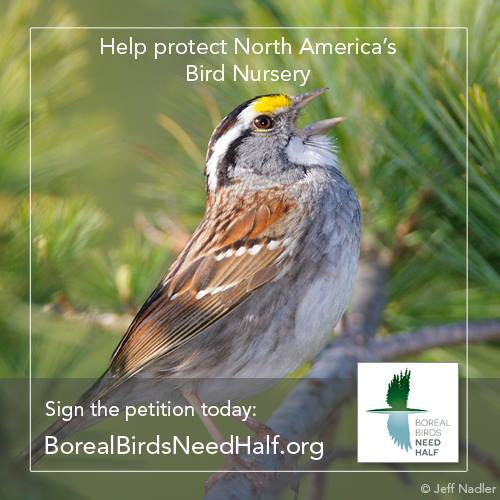 """The Boreal Songbird Initiative's """"Boreal Birds Need Half"""" campaign is aiming to keep 50% of the North American Boreal Forest from being developed."""